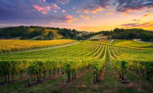 Sevre & Maine wineries